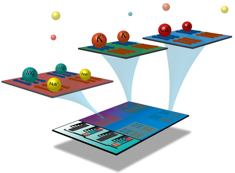 Schematics representing a vision for a future integrated silicon nanowire ion sensor. Arrays of nanowires with different functionalization schemes allow for the specific and spatially-resolved detection of different ions as well as pH.