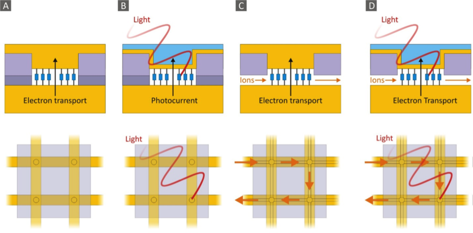 Figure caption: Schematic representation of a nanopore for probing electron transport (A) or molecule-photon interactions (e.g. for light-harvesting applications) by using a semi-transparent top or bottom electrode (B). Nanopores are interconnected via oxide-embedded microchannels to enable ionic exchange in electrochemical studies (C). Influence of light and electrochemical environment on molecular transport can further be studied simultaneously (D). Lower row shows 2x2 nanopore arrays and electrical and electrochemical interconnects. Every nanopore can be addressed electrically, optically, electrochemically or a combination thereof.