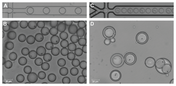 A: Encapsulation of an aqueous phase using a microfluidic chip.